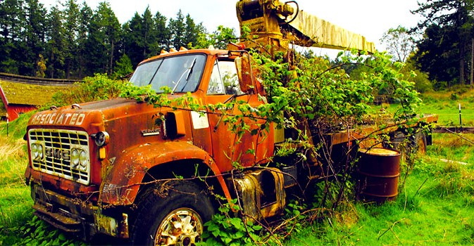 A abandoned truck covered in weeds